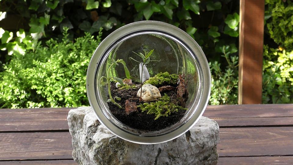 Terrarium miniature