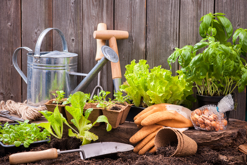 Légumes et outils de jardin