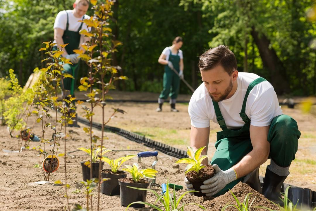 Paysagiste entrain d'entretenir un jardin