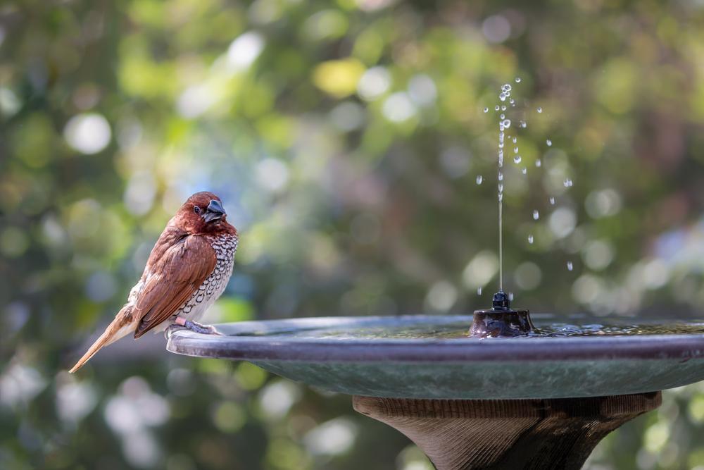 Fontaine de jardin avec un oiseau