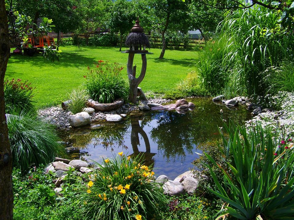 Un jardin aquatique avec bassin