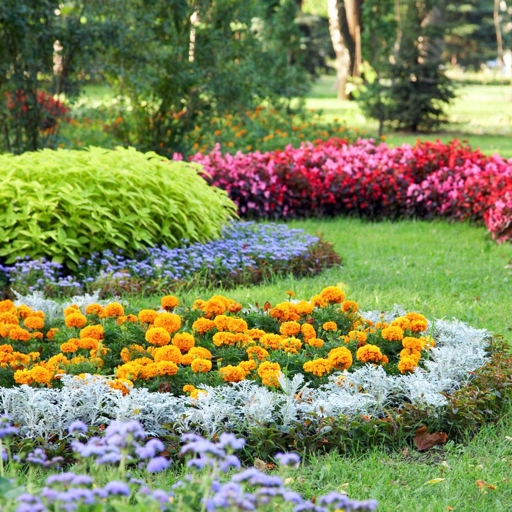 Parterre de fleurs jardin