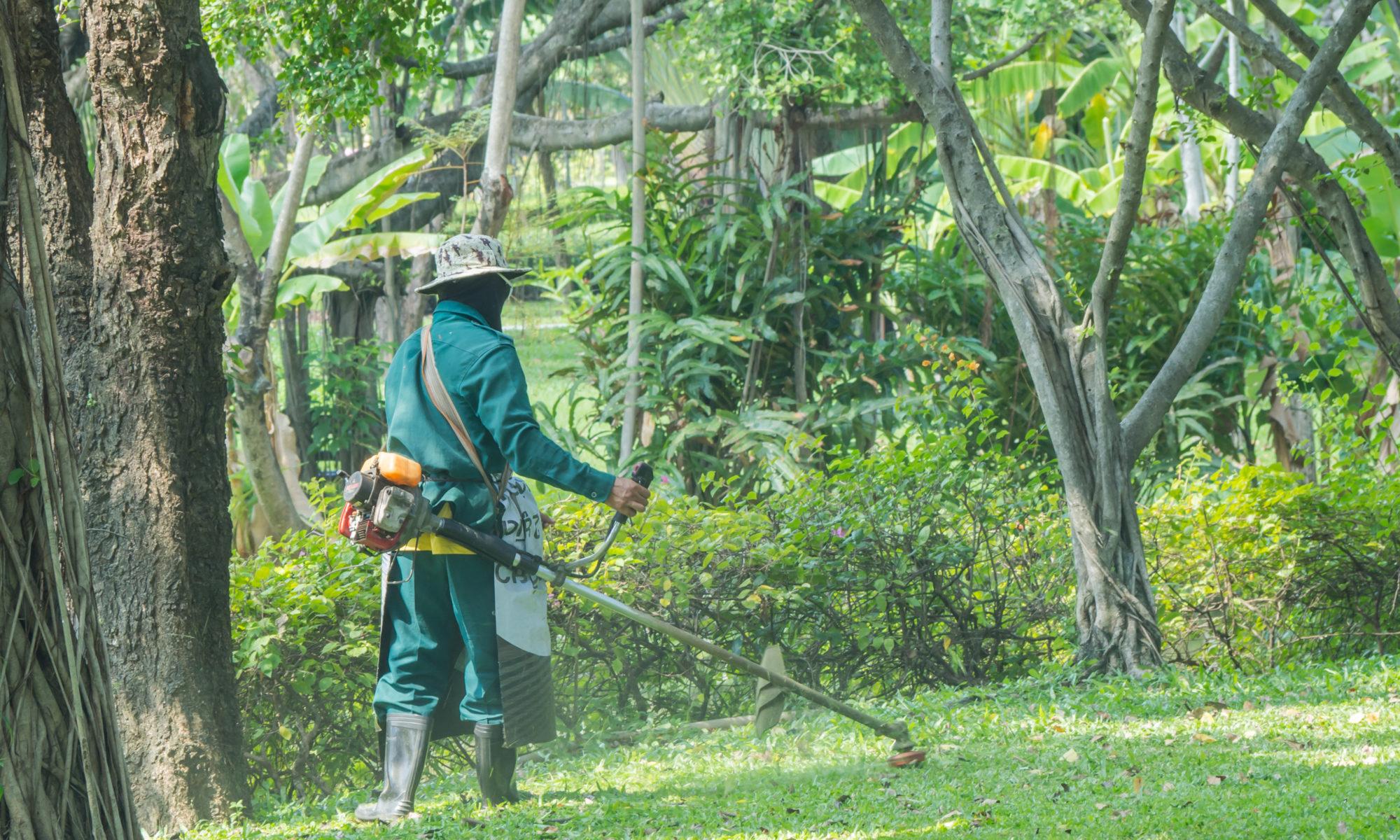 Un paysagiste dans un jardin public
