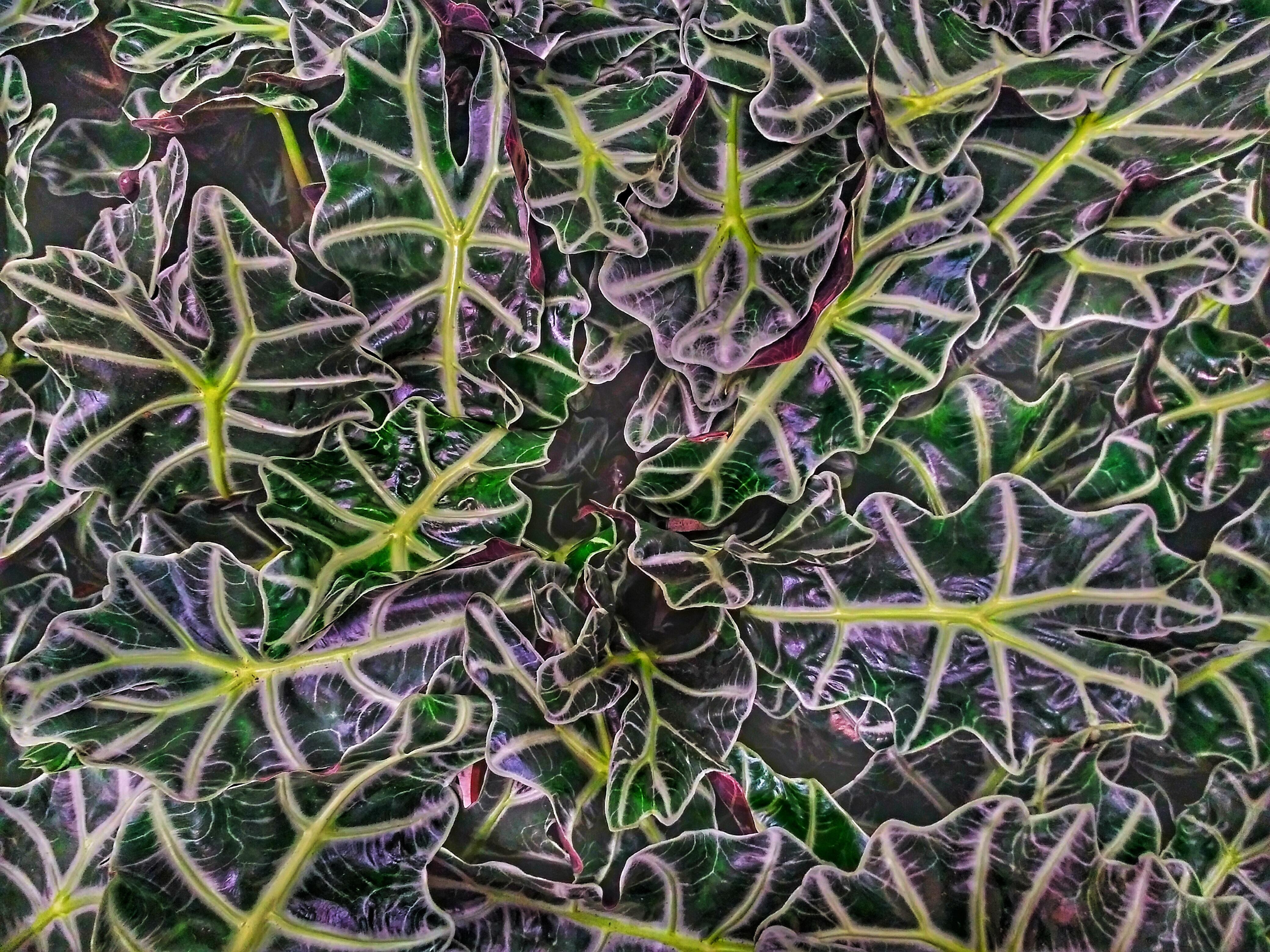 Plantes avec nervures très voyantes