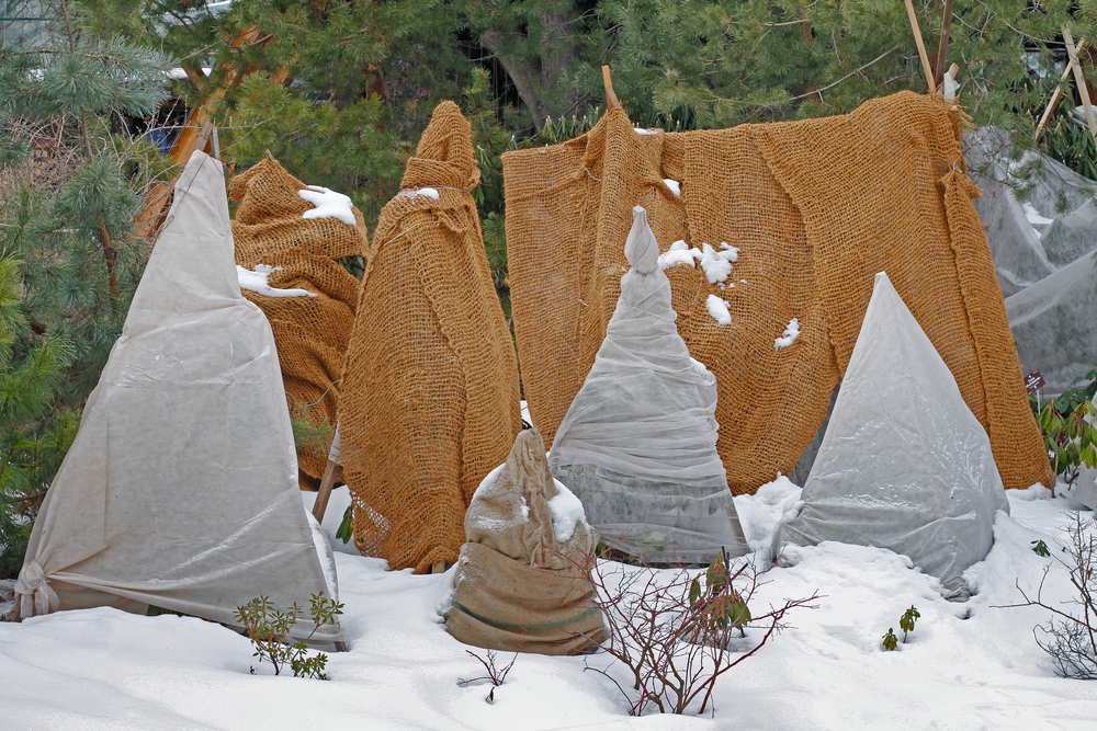 Protection hivernale des plantes extérieures