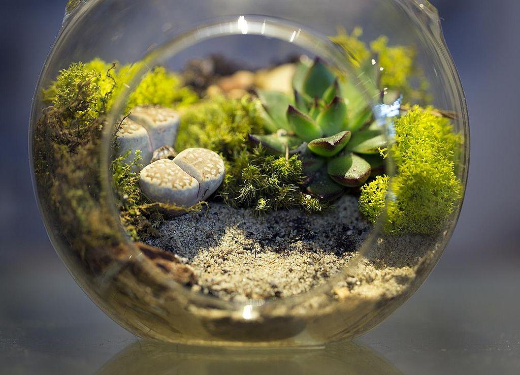 Petit terrarium